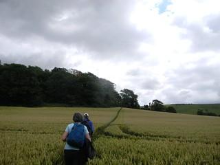 Path through field