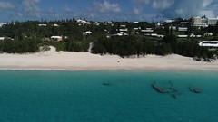 Elbow Beach - Drone View - Bermuda