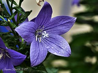 Flor-468