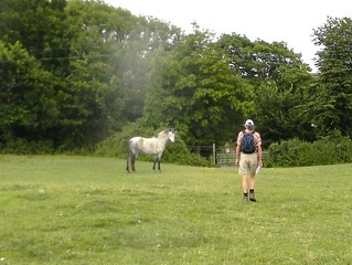 Approaching the overfriendly horse
