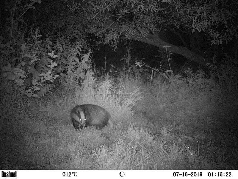Badger 7