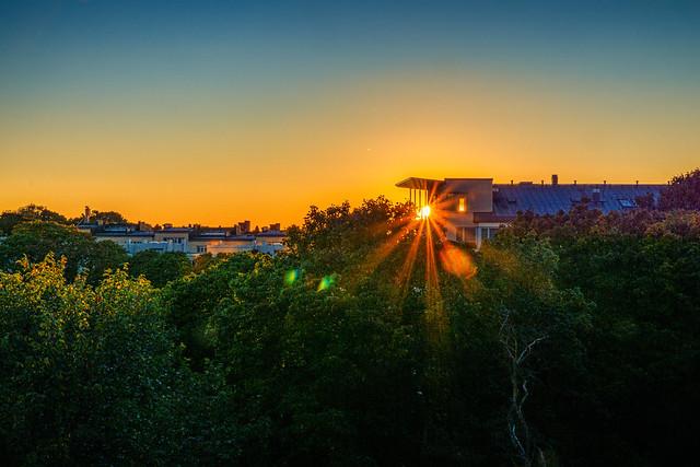 Urban jungle sunset