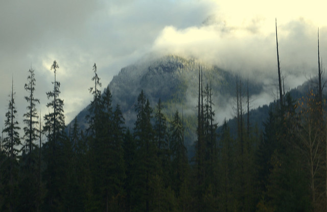 TREES AND FOREST SHOWING A BRAN NEW AND FIRST TIME SNOW LINE.  HOPE-PRINCETON HIGHWAY, CASCADE MOUNTAINS,  BC.