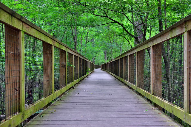 There's a Real Adventure Out There. One Just Has to Take a Step Forward... (Congaree National Park)