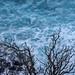 Dead Tree Pulsating Sea