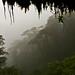 Cloud forest.  Guacamayos Ridge trail (aka Gumandi trail).  Ecuador.