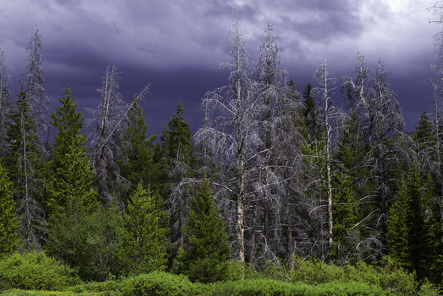 Land of a Thousand Dead Trees