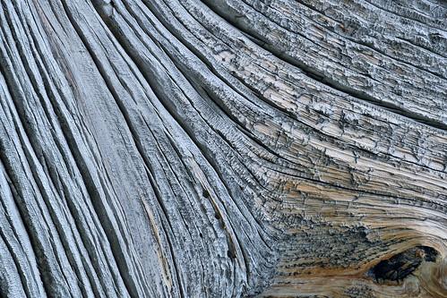 eechillington nikond7500 viewnxi corelpaintshoppro twinlakes brighton utah deadwood tree hiking abstract nature patterns