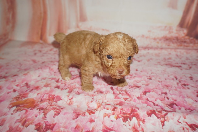 1 Big Red 14.2 oz 3W5D Old  (2)