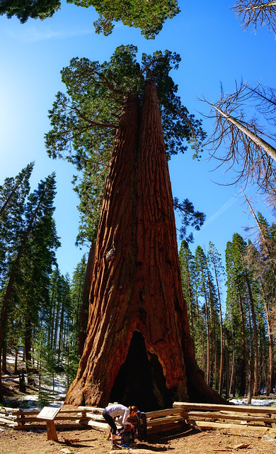 005-Mariposa Grove and Yosemite N - _DZ60049_190412-NIKON Z 6-24 mm-220528-Pano-Edit