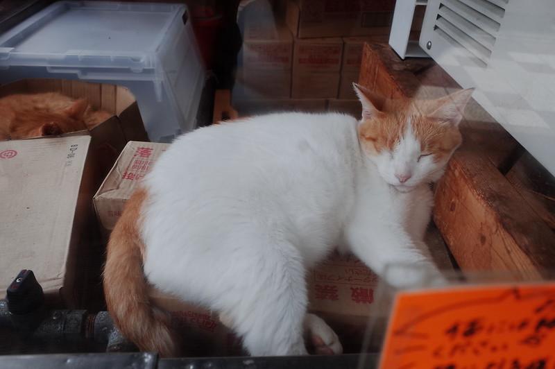 みさきまぐろきっぷの旅 城ヶ島商店街の猫 茶白