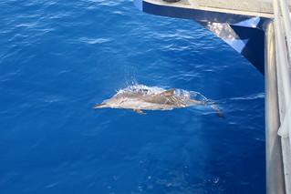 Fair Wind dolphin