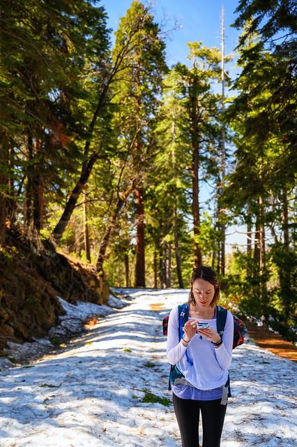 006-Mariposa Grove and Yosemite N - _DZ60061_190412-NIKON Z 6-47 mm-222305-Edit