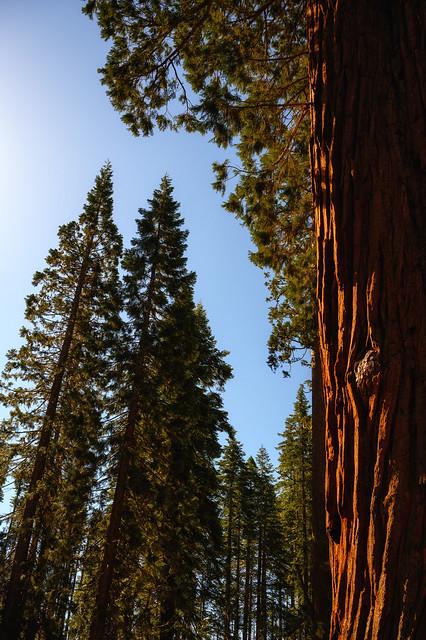 004-Mariposa Grove and Yosemite N - _DZ60048_190412-NIKON Z 6-34 mm-220438-Edit