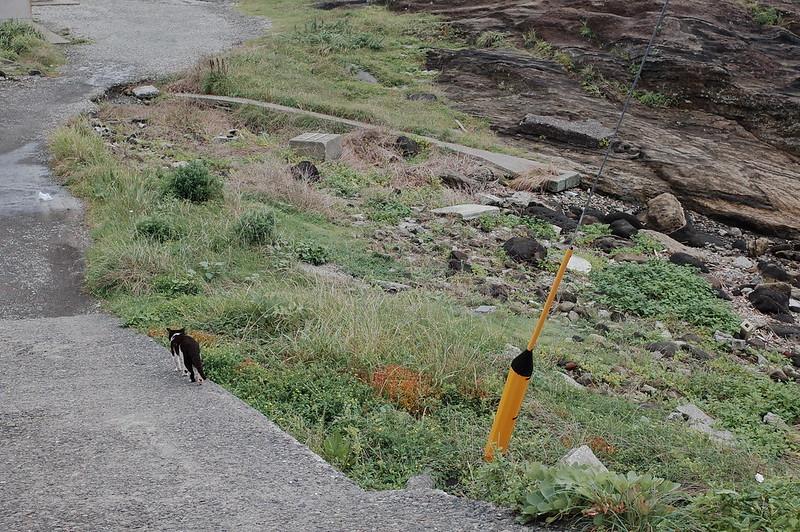 みさきまぐろきっぷの旅 城ヶ島の海岸沿いの猫 黒白八割れ