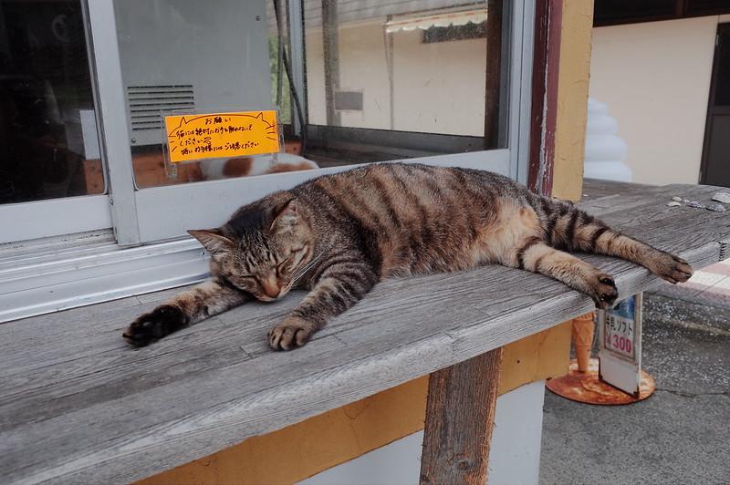 みさきまぐろきっぷの旅 城ヶ島商店街の猫 キジ虎