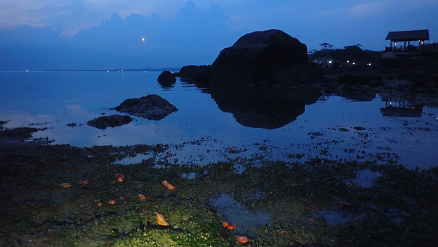 Living shores of Changi
