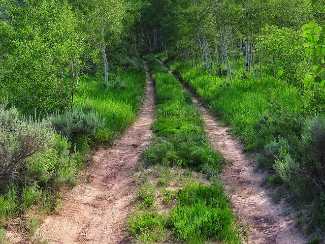 Parallel Trails