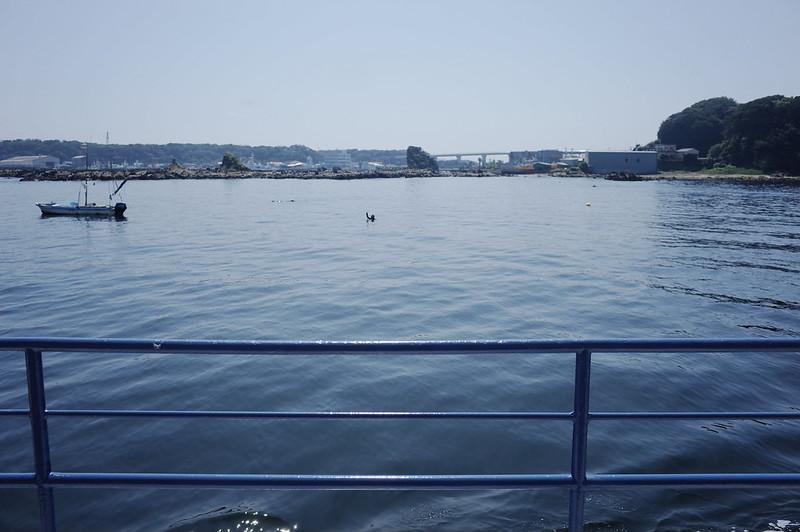みさきまぐろきっぷの旅 三崎港にじいろさかな号からの素潜り漁の漁師さん