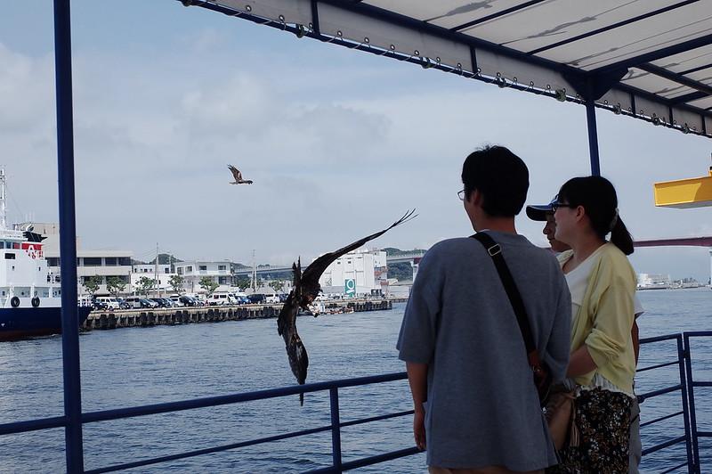みさきまぐろきっぷの旅 三崎港にじいろさかな号での餌やり