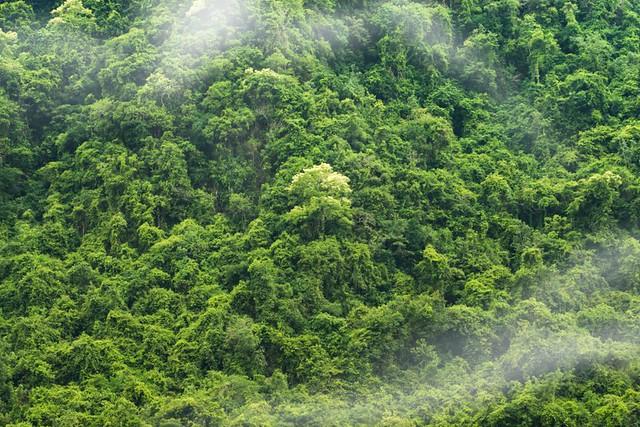Amazon-Rainforest-Brazil-e1512129865990