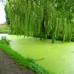 Very green canal at Preston