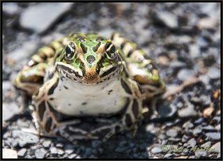 🎶You're a frog, I'm a frog, kiss me And I'll turn into a prince suddenly💋