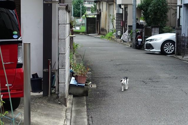 Today's Cat@2019-07-17
