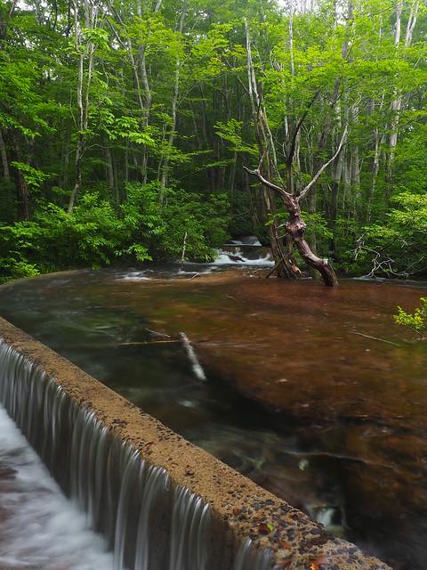 abundant in water