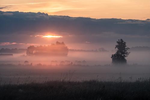 landscape nature poland morning sunrise dawn mist fog tree grass clouds