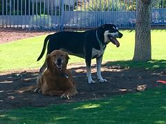 Dog Park 07.2019