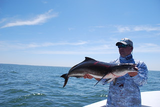 Photo of man holding a cobia.