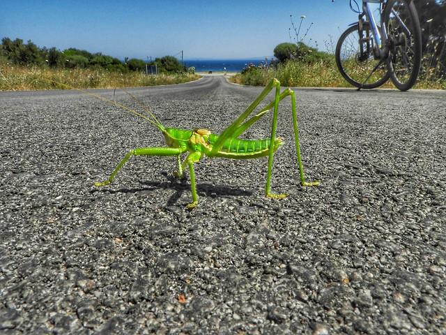 an extinct saga pedo cricket...