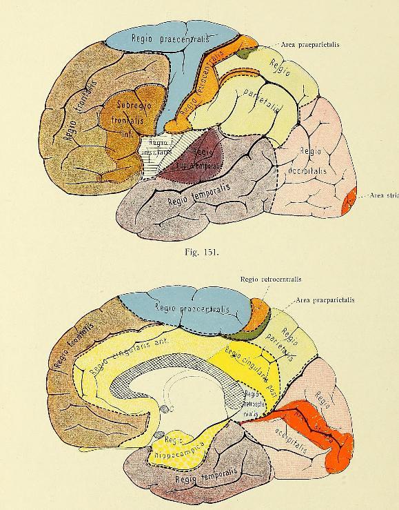 This image is taken from Page 154 of Rauber's Lehrbuch der Anatomie des Menschen : Neu bearbeitet und herausgegeben