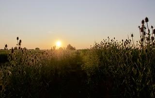 Sunset at the Beningerslikken