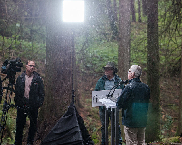 Government takes action on old growth, protects 54 groves with iconic trees