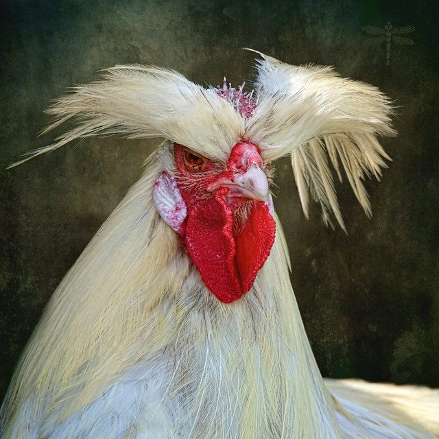 I may look calm . . . but in my head I've pecked you three times . . .