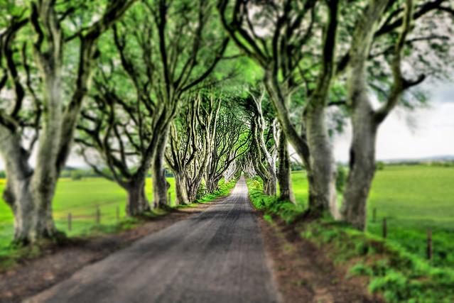 Bregagh Road NIR - Dark Hedges 10