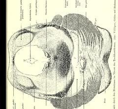 This image is taken from Page 5 of Gehirn und Auge : nach einem im Oktober 1913 vor dem Verein rheinisch-westfälischer Augenärtze in Düsseldorf abgehalten Fortbildungskurs / von Robert Bing