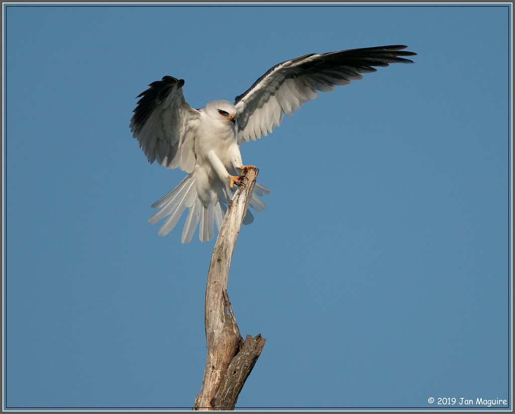 Kite on The Stick 9386