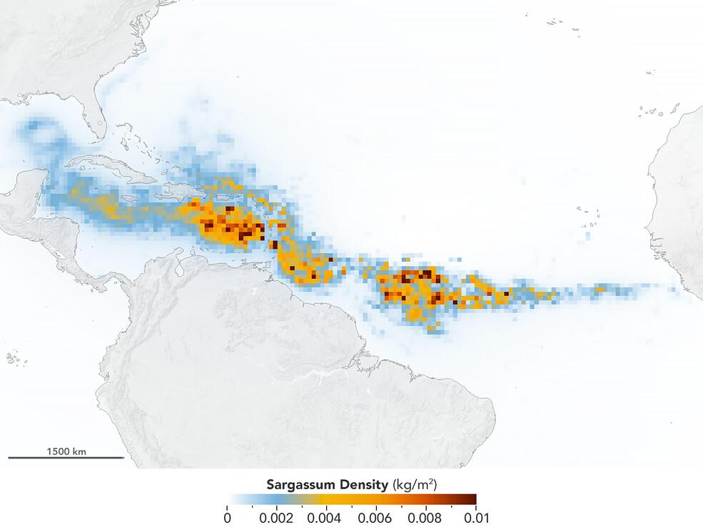 全球最大一波藻類增生來了  從墨西哥灣延伸到西非