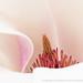 Magnolia (I), 3.4.19