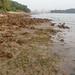 Living shores of Sentosa, Tanjung Rimau