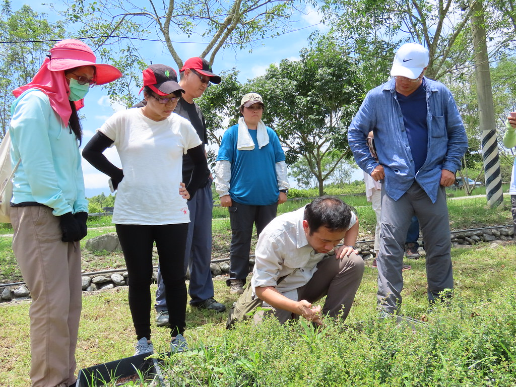花蓮林管處及林建融在中原苗圃觀察收集的台灣火刺木植株。攝影:廖靜蕙
