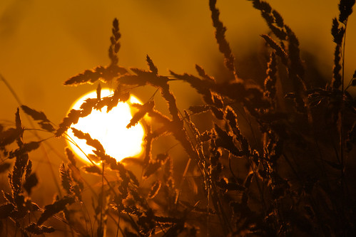 daisynook countrypark failsworth manchester uk grasses sunset tranquility oldham peaceful calm glow field beautiful