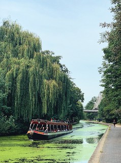 Willows of London Zoo
