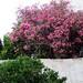 MENORCA. ALAIOR. Jardín. 07-19. 2