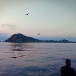 Mission de terrain aux îles Habibas et à l'île Paloma en Algérie