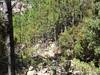 Les cairns vers le chemin aval du Carciara au ruisseau de Peru