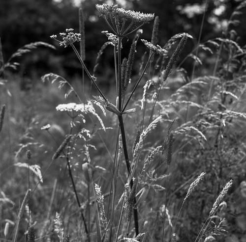 6x6 mediumformat monochrome blackandwhite tlr landscape mamiyac220